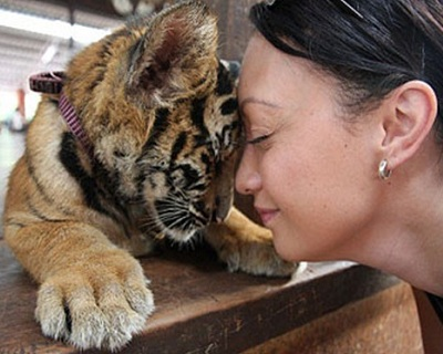 Bangkok, Thailand: Only $119 per pax for Tiger Temple + Damnoen Saduak Floa...