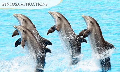 Option 1: 37% off Underwater World & Dolphin Lagoon Show + Luge & Skyride + Songs of the Sea (ADULT RATE)