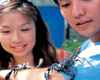 Butterfly Park & Insect Kingdom Ticket with Bird Feeding